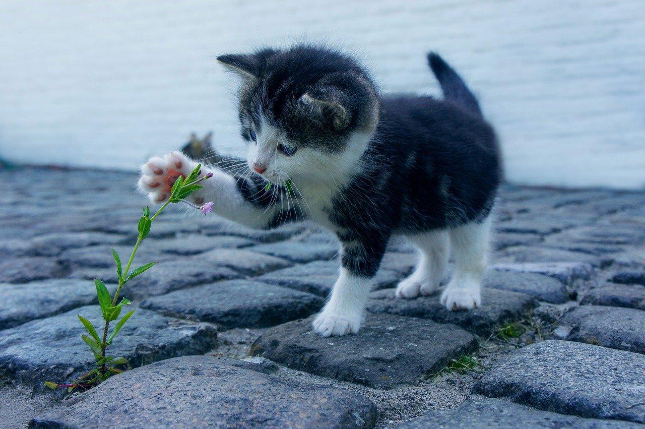 quelle est l'espérance de vie du chat